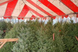 selection of trees under tent