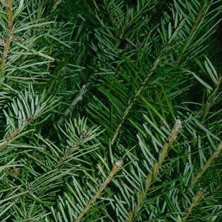 Tree Selection